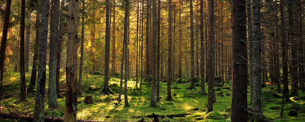 Beyond the Trees: Systems Theory as a Way to Look at Your Congregation